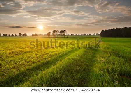 Beautiful Rural Landscape Stock photo © jkraft5