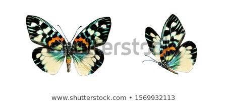 Insects set on white background Stock photo © bluering