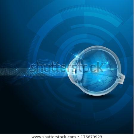 Olho anatomia azul tecnologia olhos médico Foto stock © Tefi