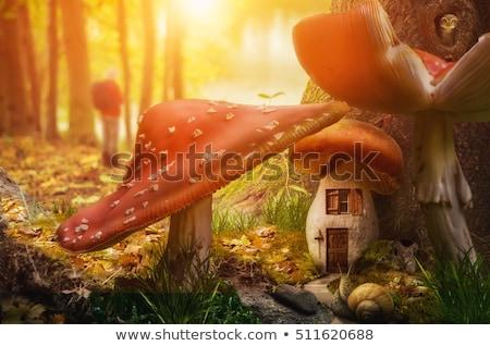 Fantázia gombák fény levelek fű terv Stock fotó © tina7shin