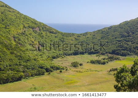 vulcânico · ilha · tenerife · pinho · floresta - foto stock © svetography