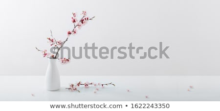 Cherry blossoms in vase Stock photo © fotogal