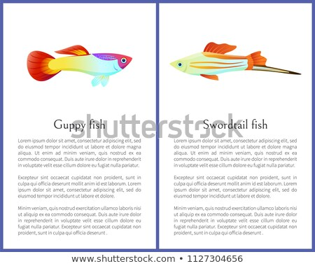 Guppy Gold and Swordtail Fishes Vector Posters Stock photo © robuart