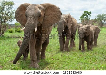 Afrika · doğa · görüntü · sanat · kum · bitki - stok fotoğraf © clairev