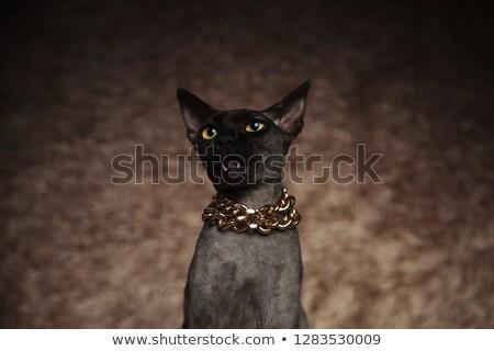 cabeça · gato · colar - foto stock © feedough