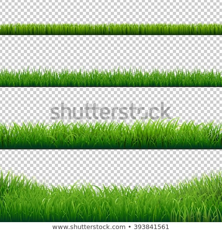 Stock photo: Green Grass Border