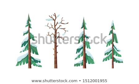 Bare Trees with Branches Covered with Snow Set Stock photo © robuart