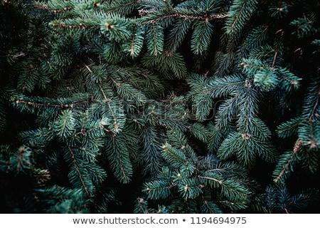 Vrolijk christmas groene banner pijnboom bladeren Stockfoto © SArts