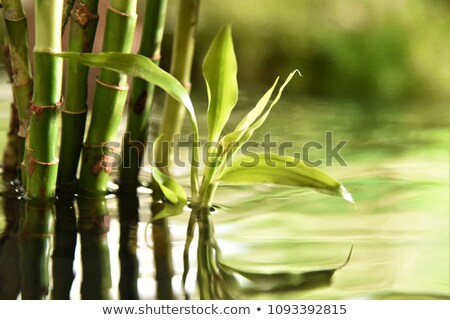 sűrű · bambusz · erdő · Kiotó · Japán · fa - stock fotó © stoonn