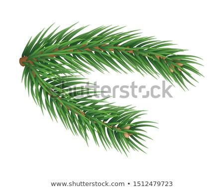 Fenyőfa zöld égbolt természet növény erdő Stock fotó © marylooo