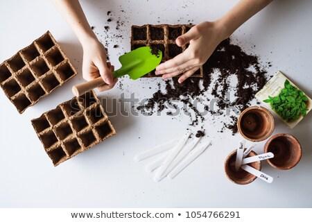 Sowing seeds indoor Stock photo © ivonnewierink