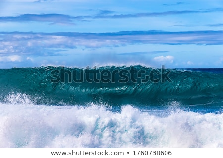 curl background Stock photo © gladiolus
