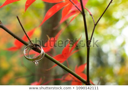 Life ring hanging on tree  Stock photo © nuiiko