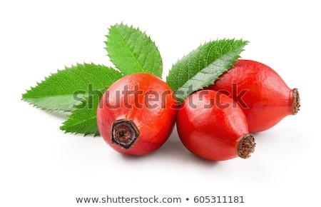 vermelho · rosa · quadris · ramo · folha - foto stock © rbiedermann