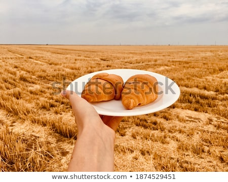 healthy meal at mown field  stock photo © OleksandrO