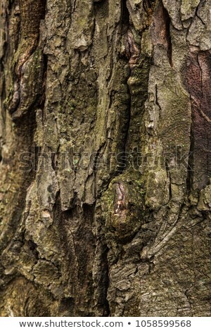 Fissures beaucoup arbre rouge grain Photo stock © pixelsnap