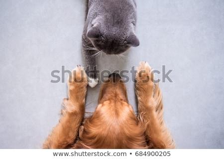 Stockfoto: Hond · katten · vriendschap · kat · portret · grappig