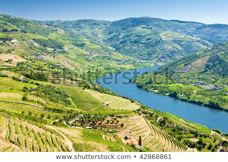völgy · bor · régió · északi · Portugália · unesco - stock fotó © homydesign