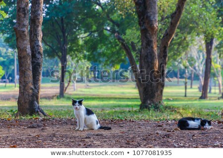 кошки · дерево · осень · красивой · Китти · сидят - Сток-фото © mikko