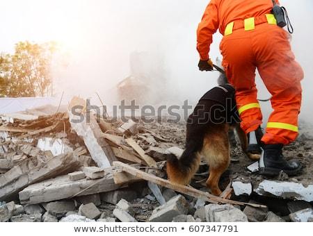 Kurtarmak köpek kar kış yardım genç Stok fotoğraf © adrenalina