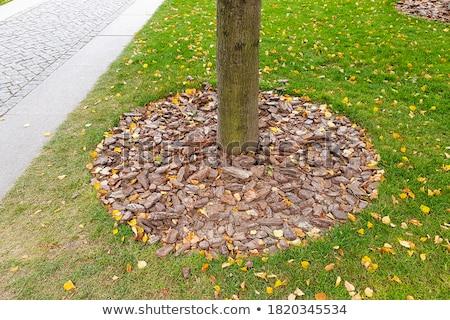 cair · madeira · jardim - foto stock © reicaden