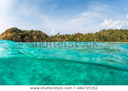 Palm tree reflection in saltwater Stock photo © smithore