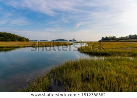 Stock photo: Long peaceful reeds
