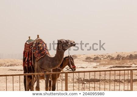 ギザのピラミッド · カイロ · エジプト · 建設 · 神 · 歴史 - ストックフォト © backyardproductions