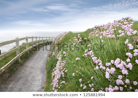 Stock photo: wild flowers along a cliff walk path