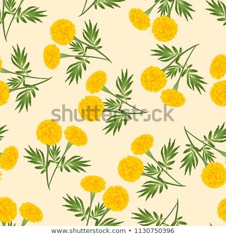 Yellow Marigold flower Stock photo © Yongkiet