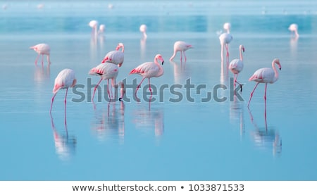 Beautiful flamingo outdoors Stock photo © amok