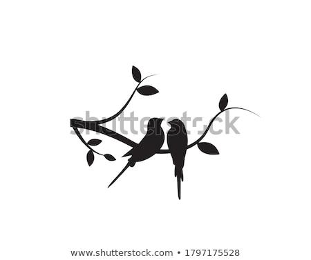 Stock photo: birds couple