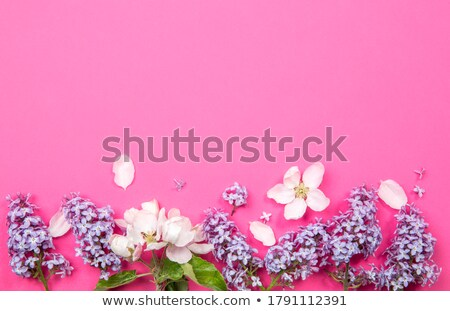 Valentines Day celebration greeting card decorated with white he stock photo © c12
