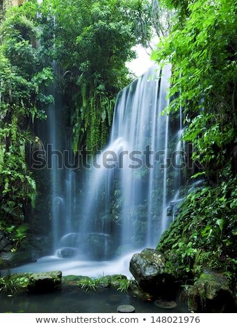 Peaceful Tropical Waterfall Stock photo © Kacpura