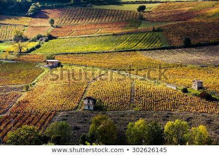 vineyards near Beaujeu, Beaujolais, Rhone-Alpes, France Stock photo © phbcz