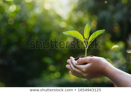 tree growing out earth Stock photo © tdoes