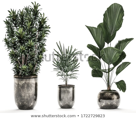 A landscaping plant Stock photo © bluering