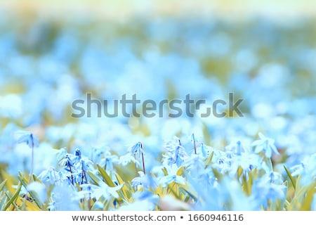 свежие лес весны начала Сток-фото © backyardproductions