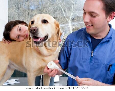 собака · техник · готовый · человека · здоровья - Сток-фото © wavebreak_media