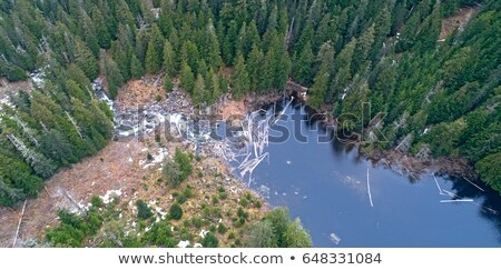 Stock photo: Clearing the Beaver Dam