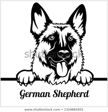 Cartoon German Shepherd Sign Stock photo © cthoman