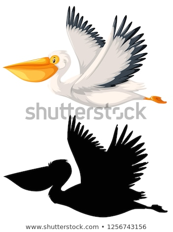 Aet of pelican character Stock photo © bluering