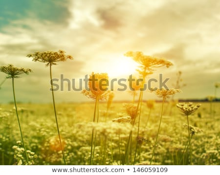 草原 山 光 ツリー ストックフォト © fotogal