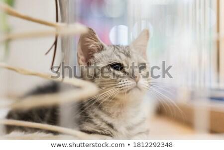 Gatos grande jaula ilustración gato Foto stock © colematt