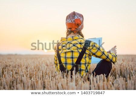 Gazda nő aratás hozam hosszú nap Stock fotó © Kzenon