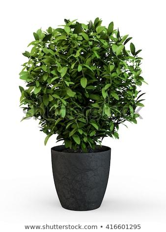 Stock fotó: Szett · díszítő · növények · illusztráció · fa · természet