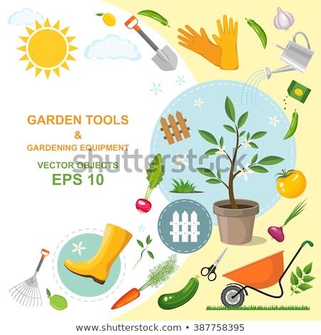 Kertészkedés felszerlés szerszámok ásó gereblye tavasz Stock fotó © LoopAll