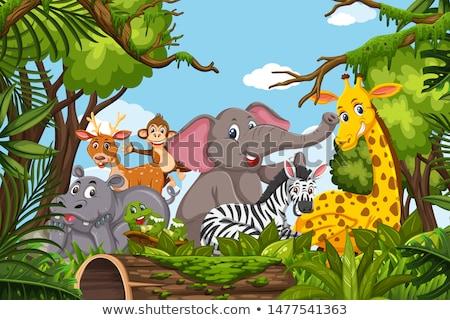 Dżungli scena ilustracja trawy sztuki roślin Zdjęcia stock © bluering