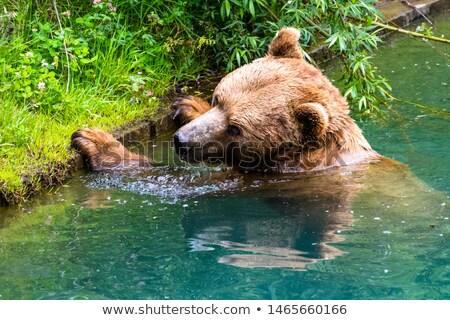 bern bear park stock photo © borisb17