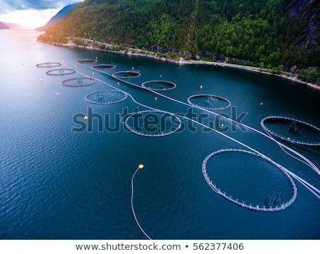 Gospodarstwa łososia połowów Norwegia producent świat Zdjęcia stock © cookelma